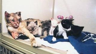 Mèo mẹ xông vào đám hỏa hoạn 5 lần để cứu đàn con nhỏ, nhìn dáng vẻ ai cũng rơi nước mắt