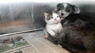 Câu chuyện về bản năng làm mẹ của cô chó hoang nhận mèo làm con nuôi chạm tới trái tim tất cả mọi người