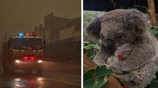 Ơn trời mưa rồi! Trận mưa lớn cứu tinh cho đại thảm họa đã xuất hiện, nhiệt độ giảm làm dịu cơn bão lửa tại Úc