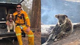 """""""Nàng chó triệu đô"""" dũng cảm lao vào đám cháy dữ dội để giải cứu những con gấu koala bị mắc kẹt trong đợt cháy rừng kinh hoàng ở Úc"""