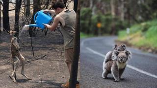 Những tin tức mát lòng giữa bão lửa kinh hoàng, thắp sáng thêm niềm tin và sự lạc quan cho người dân Úc
