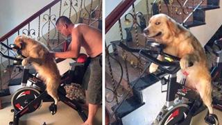 """Uống say rồi bắt chó cưng đi đạp xe tập thể dục, ông bố bị con trai """"bóc phốt"""" trên MXH"""