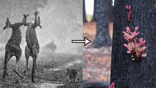 """Sau cơn mưa, những cánh rừng bị thiêu rụi ở Úc bất ngờ """"hồi sinh"""""""