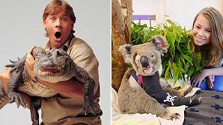 """Ra tay cứu chữa hàng nghìn con vật trong thảm hoạ cháy rừng Úc, gia đình """"thợ săn cá sấu"""" lừng danh được dư luận hết lời tán dương"""