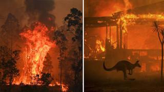 """Truy tố 24 người vì tội cố ý phóng hỏa gây ra cháy rừng thảm họa tại Úc: """"Họ cảm thấy phấn khích khi nhìn lửa bốc lên"""""""