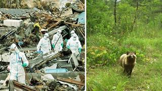Phép màu giữa khu rừng phóng xạ của Fukushima và minh chứng cho câu: Chỉ cần con người không tới, thiên nhiên sẽ tự biết cách tồn tại