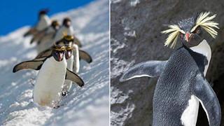 Chim cánh cụt – Một xã hội đầy tệ nạn