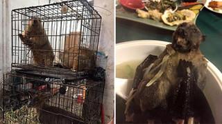 Đột nhập khu chợ động vật tại Trung Quốc chính là tâm điểm gây ra bùng phát virus: Koala, dơi, rắn, chuột đều được bày bán