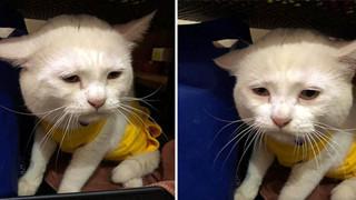 Cô gái than thở vì mua phải chú mèo có khuôn mặt sầu đời khó hiểu