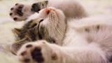 Tổng hợp những tựa phim về mèo ngọt ngào như Adorable Home (Phần 2)