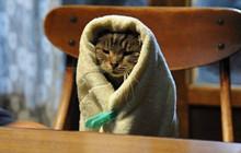 Tổng hợp những tựa phim về mèo ngọt ngào như Adorable Home (Phần 1)