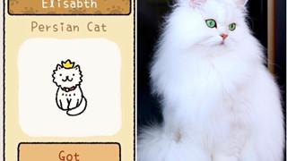 Adorable Home: Hé lộ hình ảnh đời thực của 12 chú mèo hay dỗi