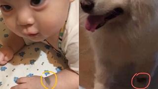 Em bé và chú cún đã mất của gia đình có cùng vết bớt trên tay, bạn có tin vào luân hồi chuyển kiếp không?