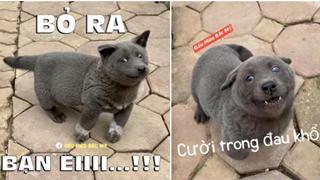 Điểm qua loạt thú cưng nổi tiếng và được chế ảnh meme khắp các diễn đàn mạng hiện nay
