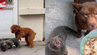 """Chú cún Dúi suýt """"ra rìa"""" vì hội bạn thân mặn mà không kém"""