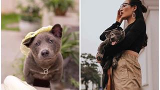 Idol Nguyễn Văn Dúi chuyển nghề làm mẫu ảnh, chẳng những quảng cáo rau củ quả còn lấn sân sang cả thời trang