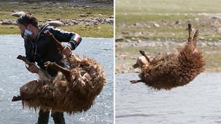 Cận cảnh tắm cừu tại Kazakhstan khiến CĐM cười điên đảo: Đây là bức ảnh phát ra âm thanh!