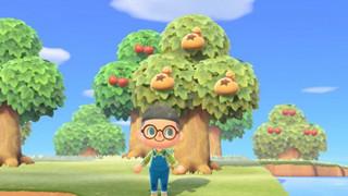 Animal Crossing: New Horizon - Hướng dẫn cách farm tiền (Bell) nhanh nhất cho mọi người