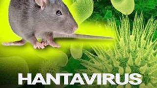 Hantavirus là gì? Bạn có nên lo lắng vì dịch bệnh mới này?