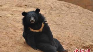 """Nuôi """"2 chú chó cưng"""" suốt 2 năm mới phát hiện ra đó là... gấu"""