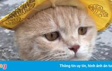 """Đảo Mèo - Hội nhóm facebook dành cho người yêu mèo lớn nhất Việt Nam """"bay màu"""" khiến nhiều người hoang mang"""