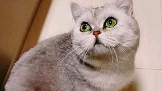 Cô mèo mang thai sống sót đầy kỳ diệu sau hơn 40 ngày bị nhốt trong nhà một mình vì cả nhà chủ nhiễm covid