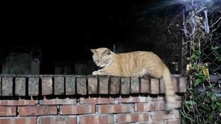 Sinh viên đại học quay video ngược đãi mèo lạc để bán, 80 con mèo lạc đã bị g.i.ế.t c.h.ế.t trong 2 tháng