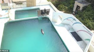 Cô cá heo tội nghiệp chết trong cô đơn sau 2 năm bị bỏ rơi trong Thủy cung Nhật bản
