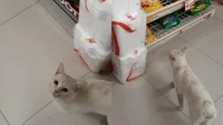 """Góc lên đời: mèo hoang dụ người lạ mua đồ ăn rồi nghiễm nhiên được rước về làm """"boss"""" để cung phụng"""