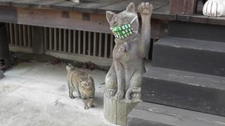 """Ngôi đền đặc biệt ở Nhật Bản được mệnh danh là """"Đền Mèo"""", trụ trì tự tay làm khẩu trang cho hàng trăm chú mèo gỗ từ tã lót trẻ em"""