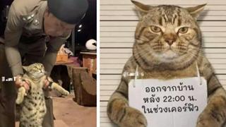 """Chú mèo vi phạm lệnh giới nghiêm, dám lang thang ngoài đường sau 22h liền bị công an """"hốt"""" ngay lên phường xử phạt"""