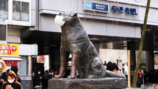 Chính quyền Tokyo kêu gọi không đeo khẩu trang cho tượng chó Hachiko