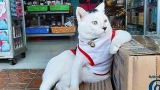 """Tuyển tập những chú mèo chăm chỉ ngồi """"trông hàng"""" và sở hữu phong thái như thể chính chúng nó mới là ông chủ"""
