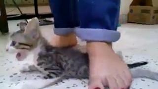 Ba cô gái nhẫn tâm dẫm đạp mèo con đến chết khiến dân mạng phẫn nộ, bật khóc