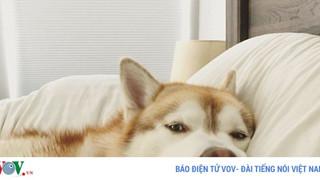 """Tình huống """"dở khóc dở cười"""" khi bị chó, mèo cưng chiếm chỗ trên giường ngủ"""