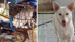 Số phận của chú chó mang bầu được giải cứu sau màn cự cãi tay đôi với người buôn chó 'chảnh chọe'