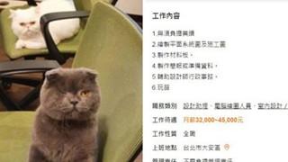 Công ty đăng tin tuyển dụng mức lương khủng còn được chơi với mèo, hội mê mệt thú cưng ngay tức khắc đổ xô ứng tuyển