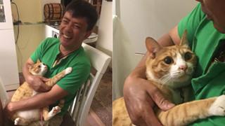 Biểu cảm đầy cảnh giác của boss khi lần đầu tiên được bố sen cưng nựng gây sốt MXH, thì ra lũ mèo có rất nhiều chiêu để lấy lòng phụ huynh!