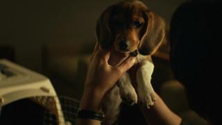 John Wick: Tiết lộ nguyên nhân vì sao chú chó yêu của Wick phải chết?