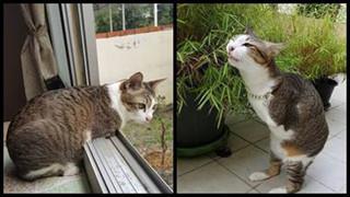 Khâm phục nghị lực sống mãnh liệt của chú mèo 2 chân