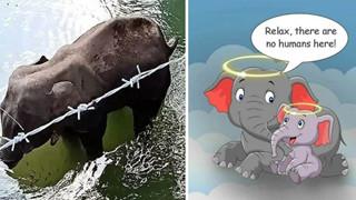 Họa sĩ trên khắp thế giới vẽ lại hình ảnh cô voi đang mang ᴛʜаі, bị dân lừa ăn quả dứa chứa pháo phát nổ rồi qua đời