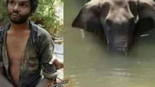 """Vụ voi ăn dứa nhồi pháo nổ: Người chết bị """"dựng dậy"""" vì nghi là thủ phạm"""