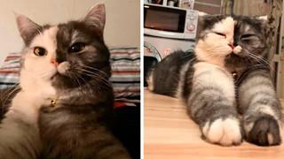 """Dân mạng phát cuồng vì bé mèo """"2 mặt"""" ú na ú nần đến từ Thái Lan"""