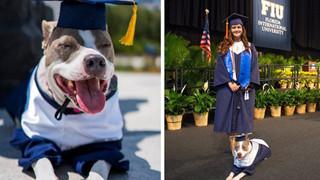 Đi học đều hơn cả chủ, chú chó được trường đại học trao bằng cử nhân danh giá