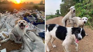 Được người đi đường cho ăn, những chú chó hoang vui ra mặt khi không cần phải ăn rác qua ngày: Hạnh phúc thật ngắn ngủi
