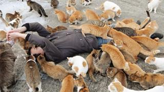 Giải mã những cái chết bí ẩn trên đảo mèo nổi tiếng Nhật Bản