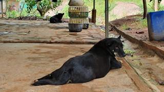 Phát hiện dấu chân chó ở nơi nghi báo đen xuất hiện