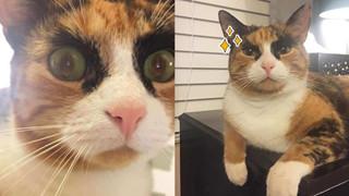 """Mang thần thái """"siết nợ"""", cô mèo ghê gớm nổi đình đám khắp nơi trên mạng xã hội"""