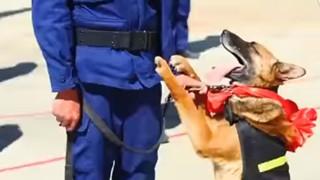 Chó nghiệp vụ giải ngũ vẫn quyến luyến chủ khiến nhiều người xúc động