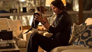 Số phận của chú chó yêu xấu số của John Wick hiện giờ ra sao?